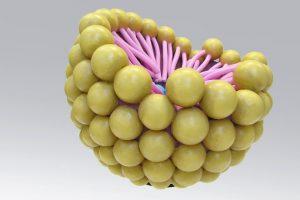 Micelle Model