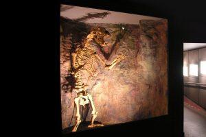 Cheddar Museum Of Prehistory