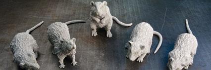 Petrified-Rats