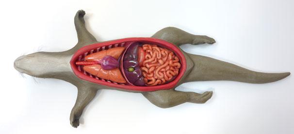 Otter-Autopsy