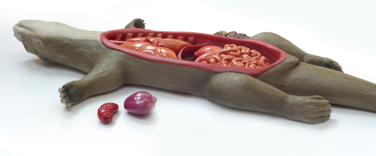 Anatomy Interactive Display Model