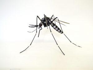 Mosquito exhibition display model