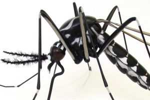 IVCC Raise Awareness With Large Display Models On World Malaria Day